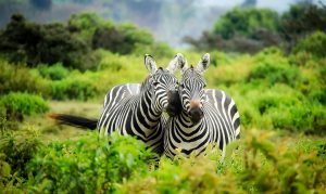 individuele prive reizen zuid afrika