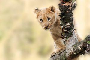 safari met kinderen familiereis zuid afrika