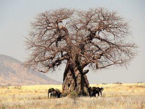 groepsreis Tanzania