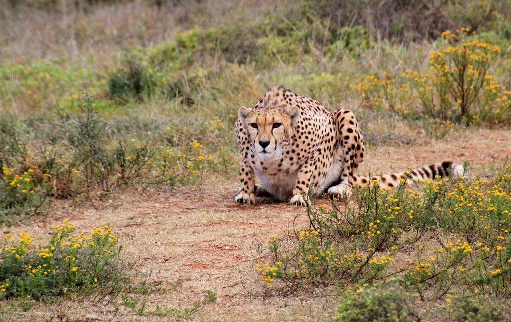 Nationale parken zuid Afrika