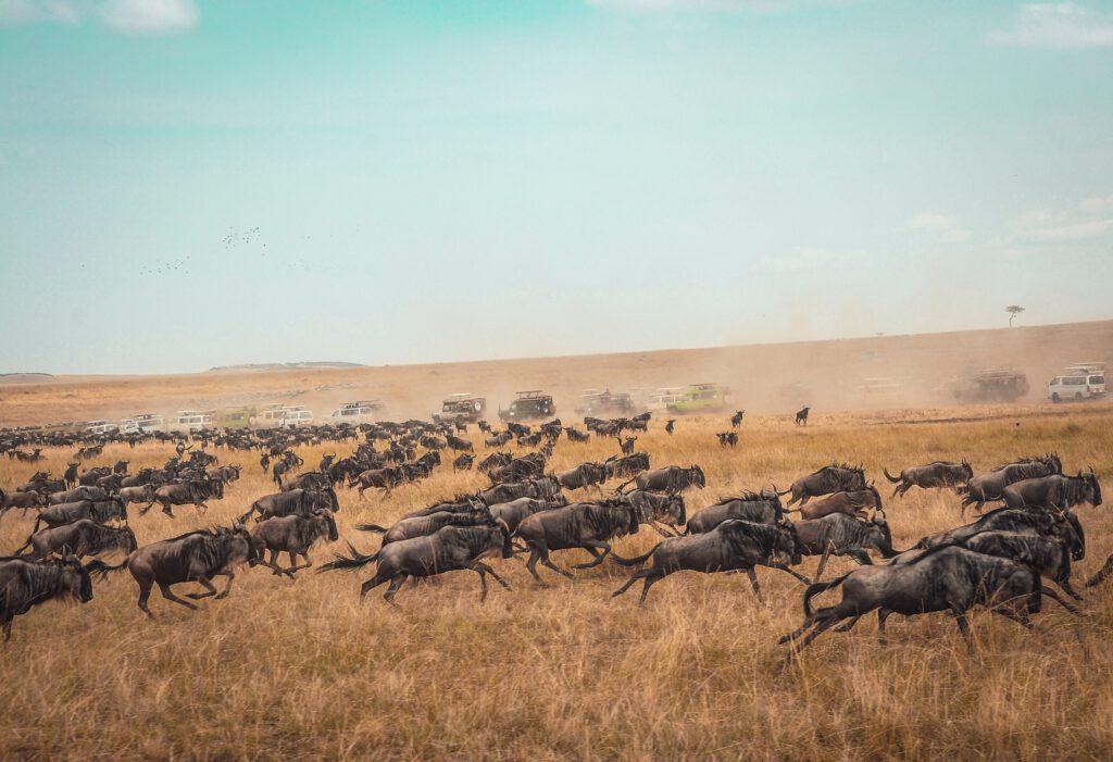Kenia safari strand vakantie masai mara