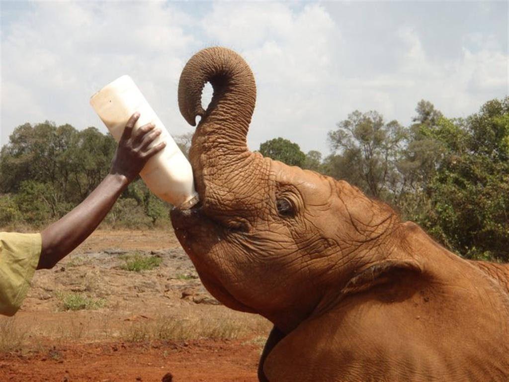 Kenia strand safari reizen vakantie olifant opvang