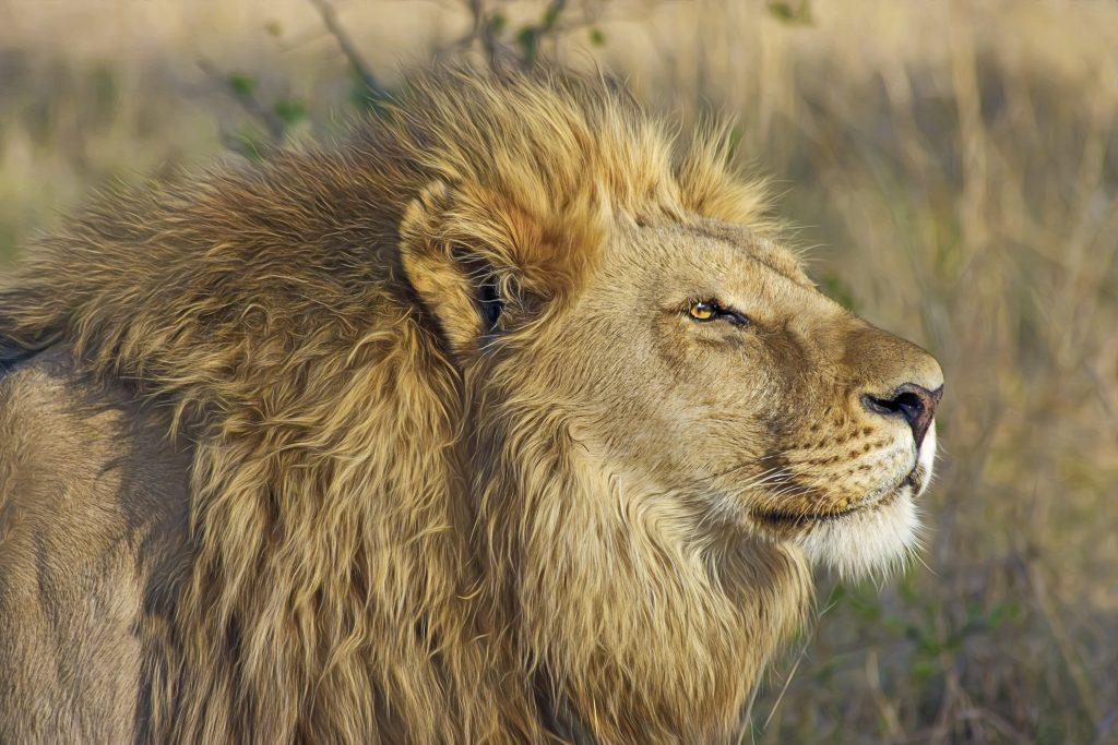 Nationale parken zuid-Afrika