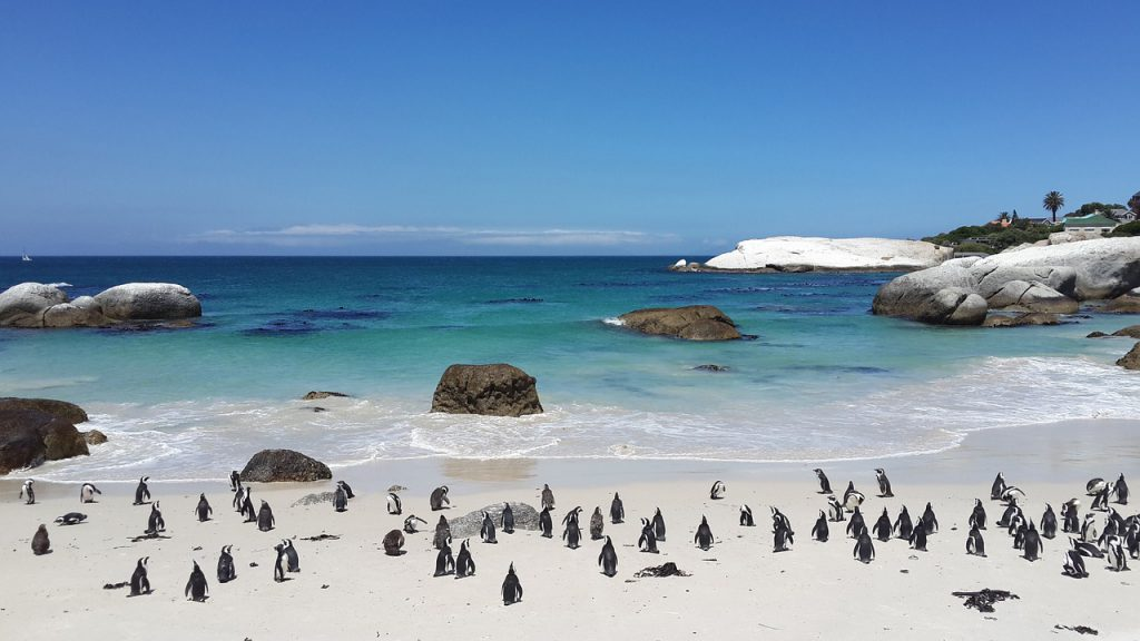 Nationale parken Zuid Afrika pinguins