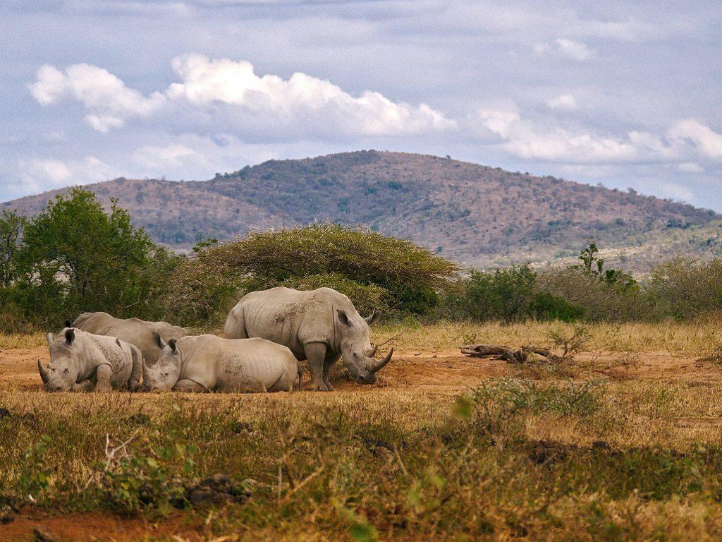 Nationale parken zuid afrika Hluhluwe imfolezi