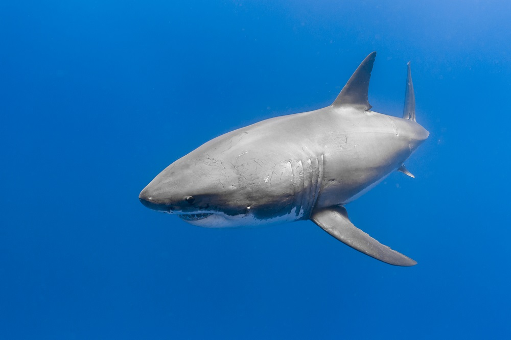 Nationale parken zuid afrika witte haai