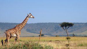 Kenia safari strand vakantie reizen