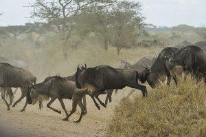 groepsreis tanzania kenia