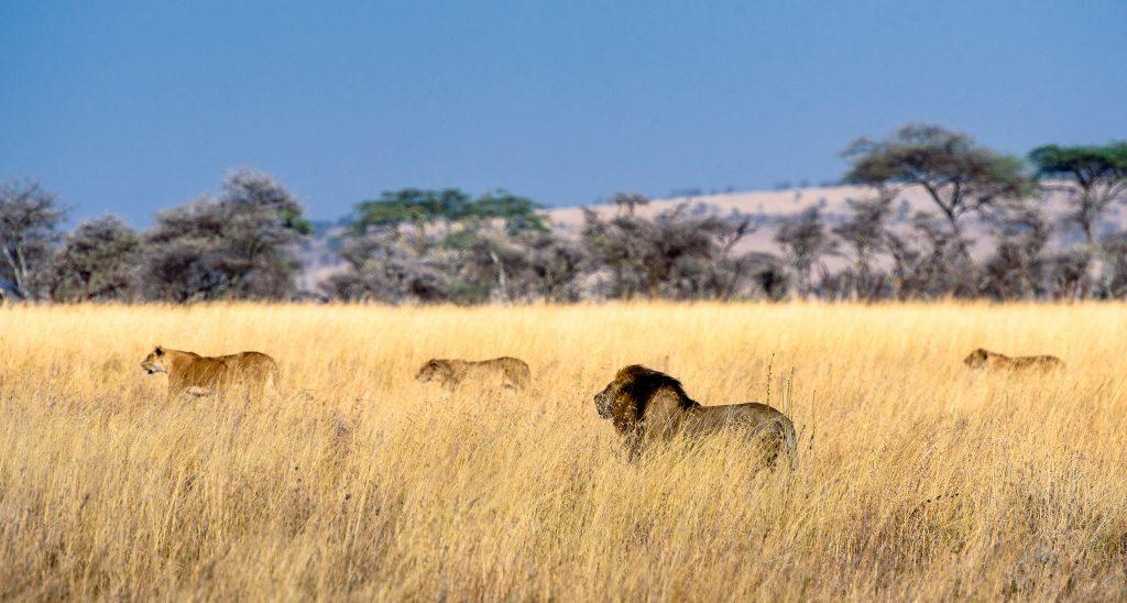 Beste reistijd Tanzania Serengeti