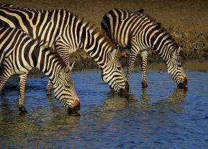 SNP individuele prive reis safari