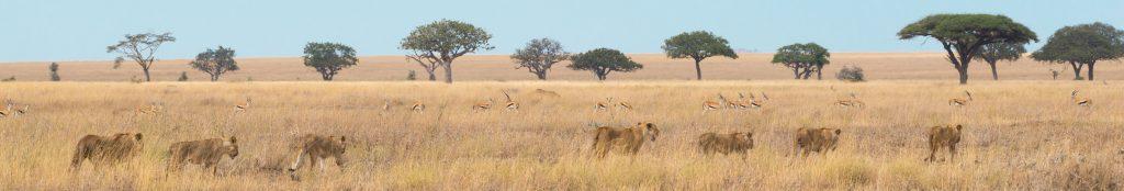 op safari in zuid afrika, tanzania, kenia of namibi�? start hier!Safari Reizen Kenia Tanzania.htm #8