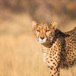 individuele prive luxe safari reis Tanzania