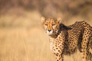 individuele luxe reis Tanzania