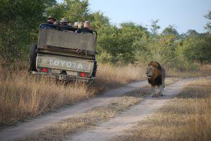 groepsreizen safari afrika