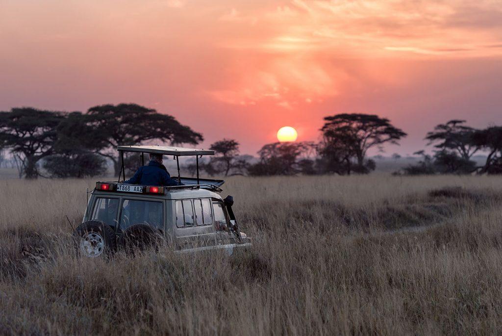 singlereis safari sunset
