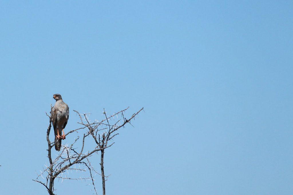 Beste reistijd Namibie vogelspotten