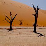Namibie rondreis deadvlei