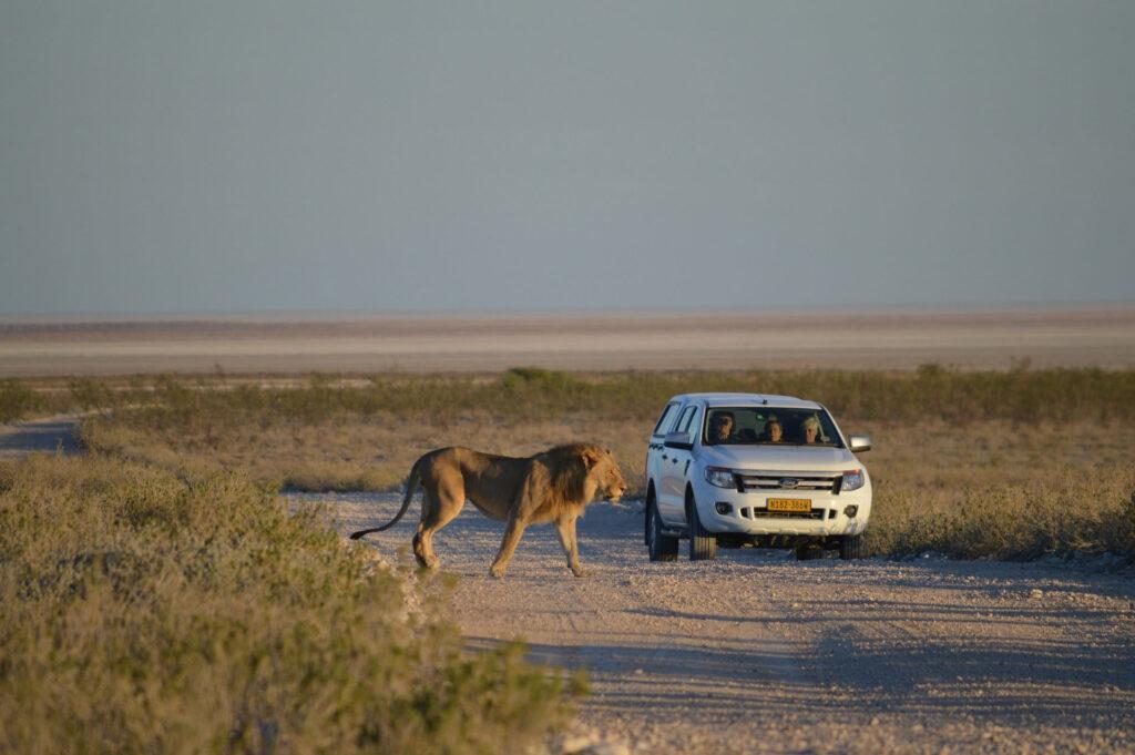 Selfdrive Namibie auto huren