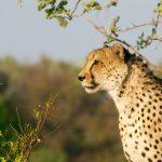 reizen met kinderen safari afrika