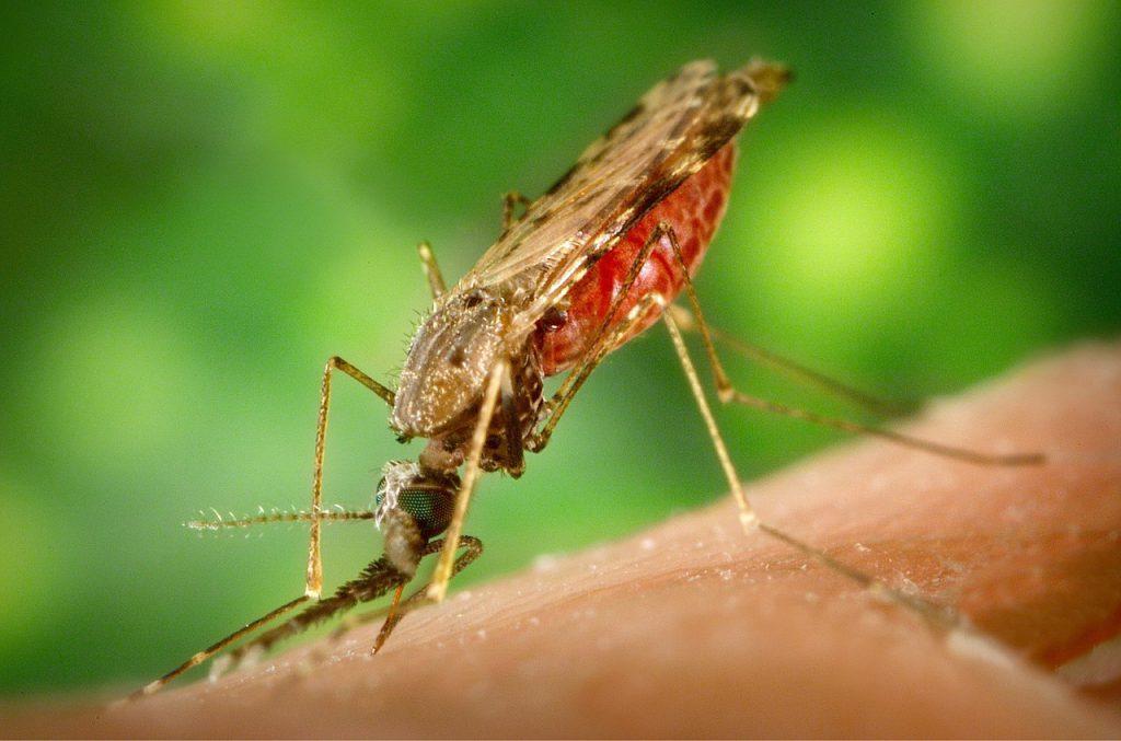 Malaria Krugerpark close up groene achtergrond