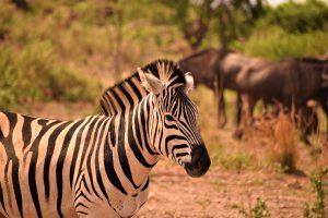Familiereizen reizen met kinderen safari Zuid afrika malariavrij