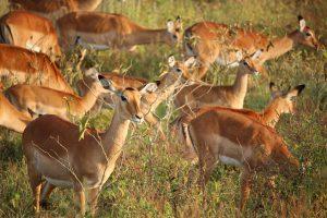 groepsreizen kenia safari strand