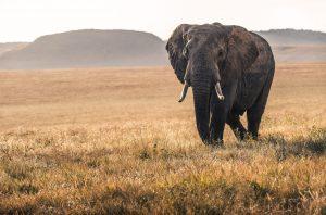 Groepsreizen safari kenia