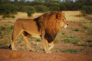 Familiereizen reizen met kinderen safari zuid afrika