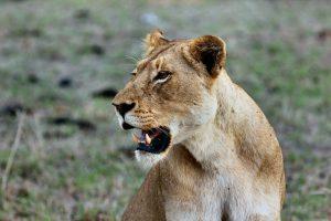 Groepsreis safari strand kenia