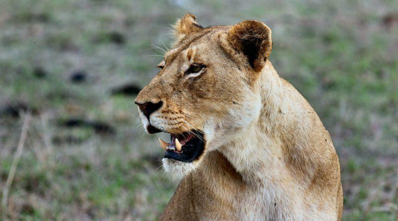 familiereis safari strand kenia