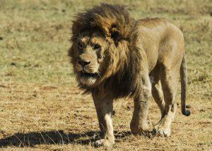 Reizen met kinderen familiereis safari Tanzania