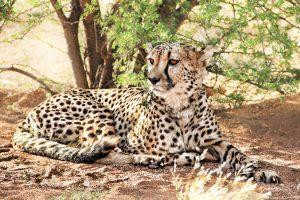 selfdrive familiereizen namibie 4x4 cheetah