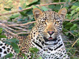 familiereizen safari met kinderen zuid afrika