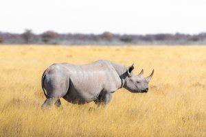 single reizen zuid afrika